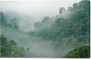 Sademetsä aamulla sumussa Kangastuloste