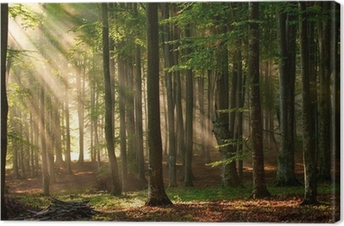 Syksyllä metsäpuita. luonto vihreä puu auringonvalon taustalla. Kangastuloste