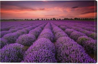 Upea maisema laventeli kenttä auringonlaskun aikaan Kangastuloste