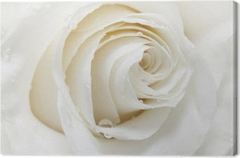 Valkoinen ruusu Kangastuloste