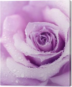 Violetti märkä ruusu tausta Kangastuloste