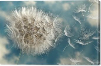 Voikukka menettää siemeniä tuulessa Kangastuloste