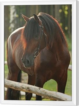 Kaunis lahti hevonen metsässä Kehystetty kangaskuva