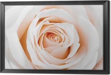 Kaunis valkoinen ruusu Kehystetty Kangas