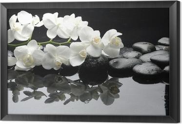 Lähikuva valkoinen orkidea kivellä vesipisaroita Kehystetty Kangas