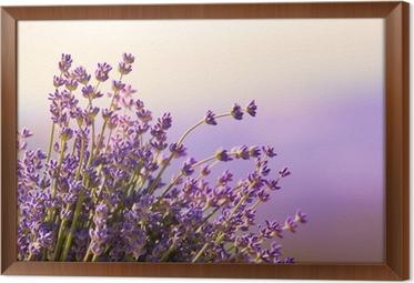 Laventeli kukat kukkivat kesäaikaa Kehystetty Kangas