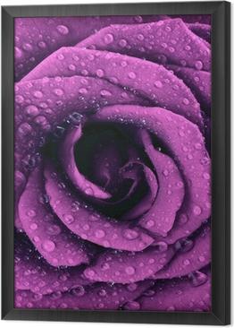 Violetti tumma ruusu tausta Kehystetty Kangas