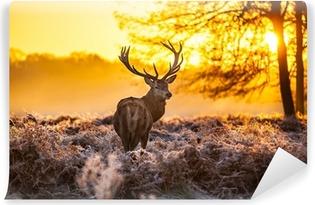 Kendinden Yapışkanlı Duvar Resmi Sabah güneşin kızıl geyik