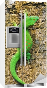 Madagaskar dag gecko Kjøleskapsklistremerke
