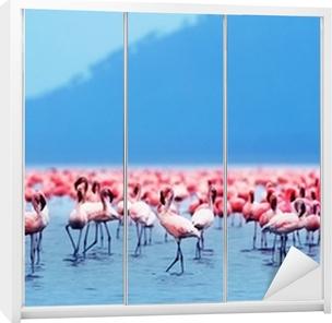 Klesskapklistremerke Afrikanske flamingoer