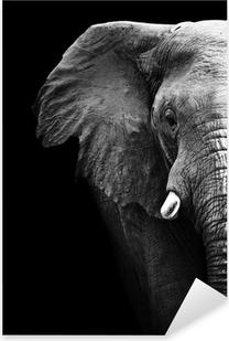 Elephant nærbillede Pixerstick klistermærke
