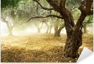 Gamle oliventræer Pixerstick klistermærke