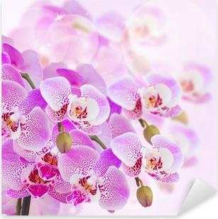 Lyserød orkidé gren nærbillede Pixerstick klistermærke