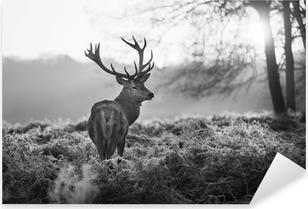 Røde hjorte i Richmond Park Pixerstick klistermærke