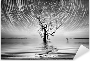 Pixerstick Klistermärken Ensam träd och stjärnspårfotografering för ditt interiör.