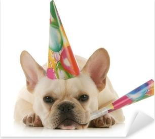 Lerretsbilde Bulldog iført blå festhue på hvit bakgrunn .. • Pixers® - Vi  lever for forandring e745dd39ad8a6