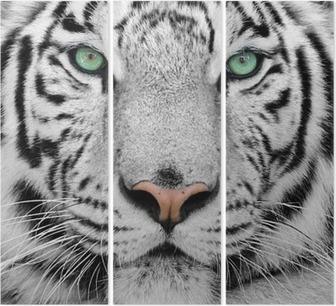 Valkoinen tiikeri Kolmiosainen