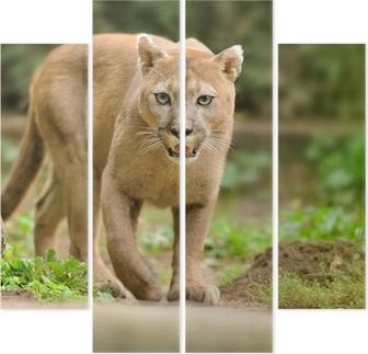 Kwadryptyk Puma