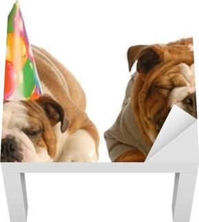 Fototapet En engelsk bulldog ler på en annen iført bursdagshue • Pixers® -  Vi lever for forandring ff0ea96ab8b32