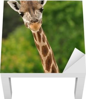 Giraf hoved med nakke Lack bord klistermærke