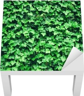 Tykt grønt vedbend forlader baggrunden Lack bord klistermærke