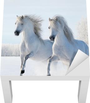 Kaksi valkoista hevosta laukkaa lumikentillä Lack-pöydän Pinnoitus
