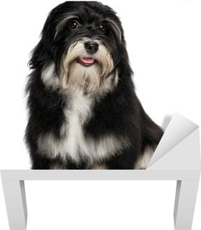 06f83d3c21e Nálepka Pixerstick Krásný úsměv Havanský psík štěně je při pohledu na  fotoaparát • Pixers® • Žijeme pro změnu