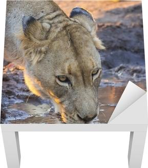 Cougar dating site Etelä-Afrikka