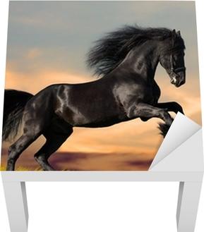 Musta friisiläinen hevonen galops auringonlaskussa Lack-pöydän Pinnoitus