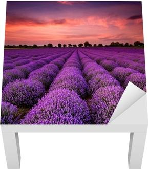 Upea maisema laventeli kenttä auringonlaskun aikaan Lack-pöydän Pinnoitus