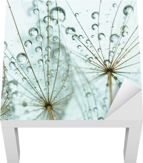 Dandelion seed with drops Lack Table Veneer