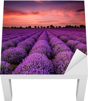 Stunning landscape with a lavender field at sunset Lack Table Veneer