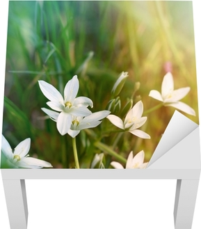 White meadow flowers poster pixers we live to change mightylinksfo