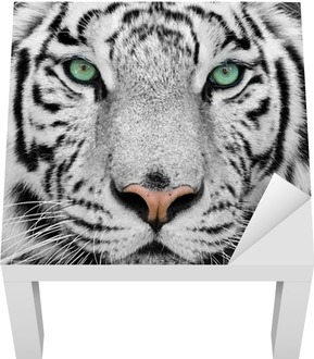white tiger Lack Table Veneer