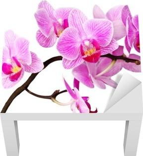 Lack Tafelsticker Geïsoleerde orchidee