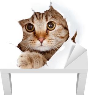 Lack-Tischaufkleber Cat looking up in Papierseite zerrissenen Loch isoliert