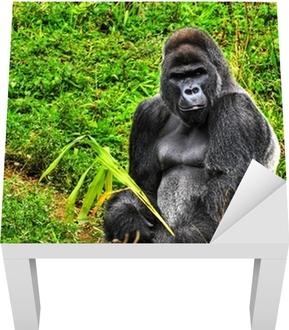 4d58ffb288c50 Tapete Ein HDR-Bild von einem männlichen Gorilla Silberrücken • Pixers® - Wir  leben