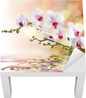 Lack-Tischaufkleber Weiße Orchideen auf dem Wasser mit Tropfen