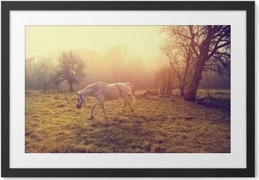 Lámina Enmarcada Hermoso caballo blanco