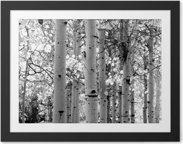 Lámina Enmarcada Imagen en blanco y negro de álamos