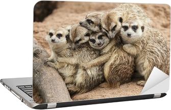 Meerkat. Laptop Sticker