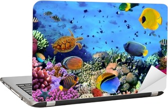 Photo of a coral colony Laptop Sticker
