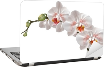 White orchid flowers Laptop Sticker
