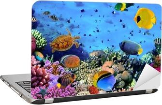 Laptopdekor Foto av en korall koloni