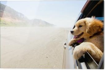 Lasitaulu Pentu katselee auton ikkunaa