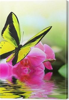 Leinwandbild 8 Schmetterling