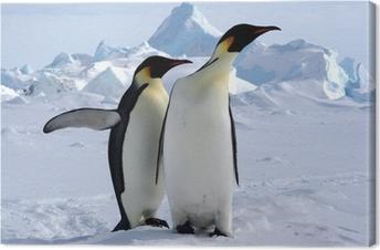 Leinwandbild Aber wo ist der Südpol? (Emperor Penguins / Antarktis)