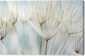 Leinwandbild Abstrakte Löwenzahn Blume