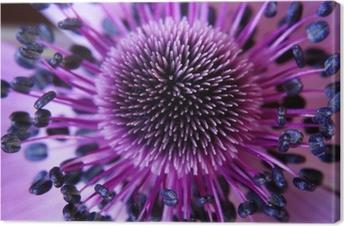 Leinwandbild Anamone Blume