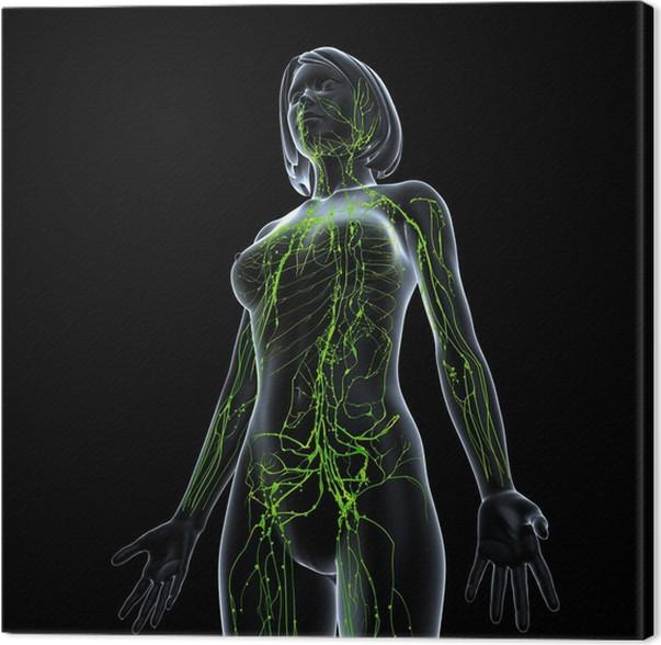 Leinwandbild Anatomie der weiblichen Lymphsystem in schwarz • Pixers ...